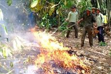 Nỗ lực giữ rừng giữa mùa khô ở Bù Đăng