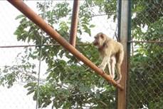 Bình Phước: Thả nhiều động vật hoang dã về Vườn quốc gia Bù Gia Mập