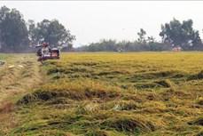 Nhiều giải pháp ứng phó hạn, mặn để sản xuất hiệu quả ở Kiên Giang