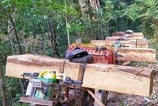 Kon Tum kiên quyết xử lý nghiêm việc khai thác, vận chuyển và mua bán lâm sản trái phép