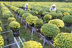 Sản xuất hoa cảnh gắn với du lịch cho hiệu quả kinh tế cao