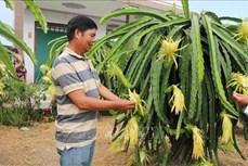Tiền Giang chuyển đổi cây trồng thích ứng hạn, mặn