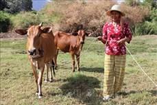 Chương trình 135 góp phần thay đổi đời sống đồng bào vùng cao Ninh Thuận