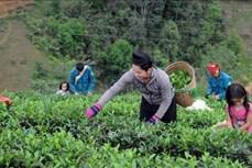 Quỹ Hỗ trợ nông dân giúp người dân huyện Thuận Châu phát triển kinh tế