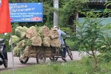Nâng cao chuỗi giá trị cây sả Tân Phú Đông