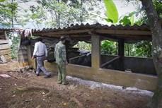 Sơn La xuất hiện bệnh dịch tả lợn châu Phi