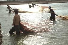 Phương pháp nuôi cá bống kèo