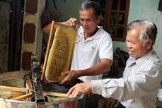Cao Bằng phát triển nghề nuôi ong lấy mật