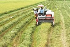 Sóc Trăng phát triển sản xuất lúa đặc sản
