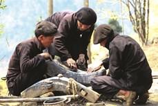 Người Mông đúc cày