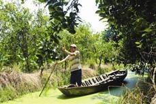 Tân Thành giảm nghèo nhờ trồng cam sành