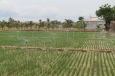 Áp dụng giải pháp tưới tiết kiệm nước