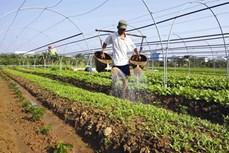 Một số nguyên tắc trồng rau an toàn