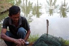 """Mô hình nuôi cua biển theo hình thức """"bắt vịt giữ cua"""" cho hiệu quả kinh tế cao"""
