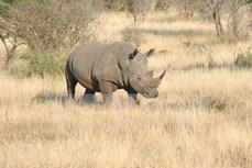 越南播放《明天,我会长大》短片 呼吁制止犀牛偷猎