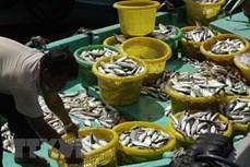 坚江省募集近12.7万亿越盾用于发展海水养殖业