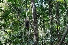 平福省把三只野生动物放回大自然