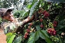 2021年第一季度越南农林水产品出口额增长近20%