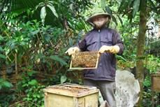 和平市独立乡注重发展养蜂业