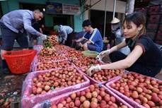 通过金城口岸向中国出口3400吨早熟荔枝