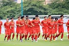 本田继续成为越南国家足球队的主要赞助商