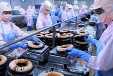 对自贸市场虾类出口猛增 企业扩大生产规模