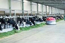 促进奶牛养殖行业