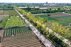 Hồng Vân hướng tới xã nông thôn mới kiểu mẫu của Thủ đô