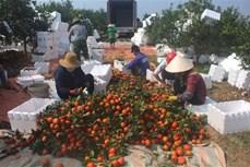 Thanh Hóa chủ động nguồn hàng cung ứng cho đồng bào miền núi dịp Tết Nguyên đán