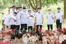 Thị xã Sơn Tây khai thác tiềm năng, lợi thế phát triển nông nghiệp
