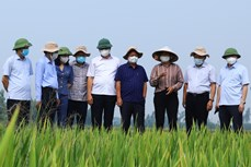 Nông nghiệp Hà Nội nỗ lực vượt khó
