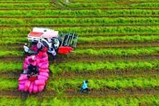 Trà Vinh nâng cao đời sống đồng bào Khmer, góp phần xây dựng nông thôn mới