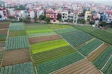 OCOP góp phần khẳng định vai trò của hợp tác xã nông nghiệp Hà Nội