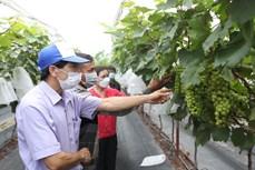 Nét đẹp nông thôn mới nâng cao Hà Nội