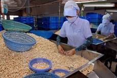新冠肺炎疫情:腰果产业将出口目标下调至32亿美元