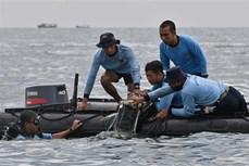 越南政府副总理兼外交部长范平明就印尼坠机事件向印尼外长致唁电
