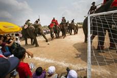 维护西原地区大象节的传统价值