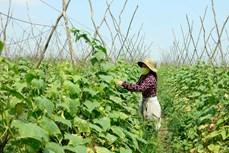 在低质低效的稻田上致富