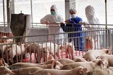 6月30日起越南暂停从泰国进口生猪