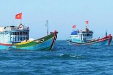越南海洋岛屿:严惩在国外海域非法捕鱼的渔船