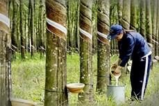 越南橡胶出口额大幅增长