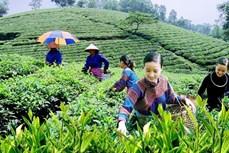 加强协调配合 做好少数民族农民生计保障