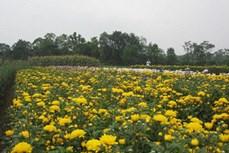 牛年临近  河南省花卉盆景市场货源充足
