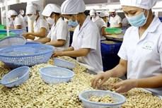 2021年越南力争实现腰果出口额达40亿美元的目标
