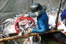 前2个月越南水产品出口总额增长2.2%
