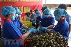 越南充分开发向澳大利亚的农产品出口潜力
