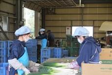新冠肺炎疫情:克服日本市场劳动力短缺的现象