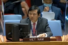 越南与联合国安理会:越南呼吁确保伊拉克选举安全