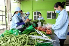 越南合作社联盟促进农产品供需对接