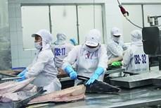 越南金枪鱼对许多主要市场的出口额大幅下降